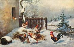 winter farmyard scene, rooster to right, five hens scratch on pile of straw to left