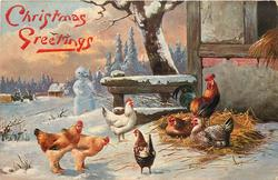 winter scene, six poultry with multicoloured rooster, snowman behind
