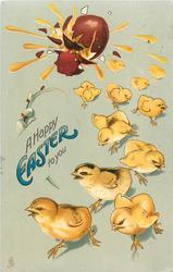 A HAPPY EASTER TO YOU  eleven chicks run from exploding chocolate EASTER egg