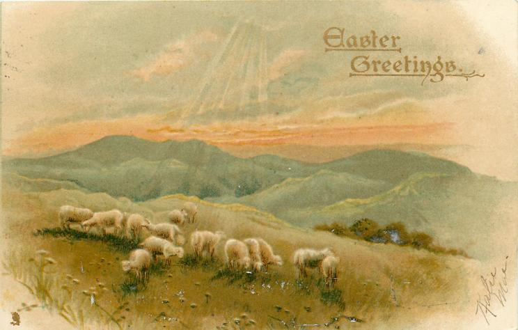 EASTER GREETINGS  sheep