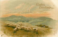 EASTER GREETINGS  sheep