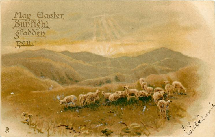 MAY EASTER SUNLIGHT GLADDEN YOU  sheep