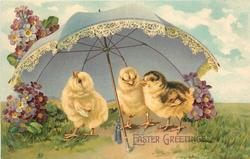 EASTER GREETINGS  three chicks under parasol, violets around