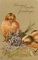 LOVING EASTER GREETINGS  two chicks peck bunch of violets on ground