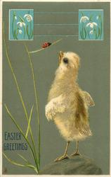 EASTER GREETINGS  chick reaches up to lady-bug, snowdrop inserts