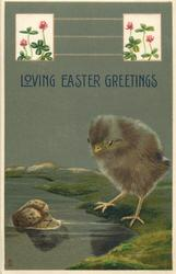 LOVING EASTER GREETINGS  brown chick looks at floating cork, clover inserts