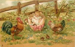 TO WISH YOU A HAPPY EASTER  girl & two recently hatched chicks, hen, rooster