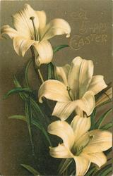 A HAPPY EASTER  liliies