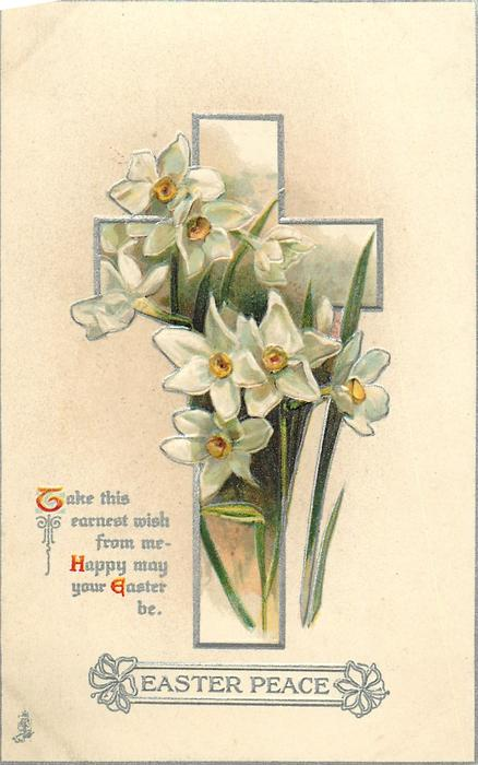 EASTER PEACE  narcissi