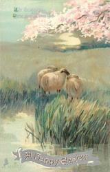 A HAPPY EASTER  sheep, blossom