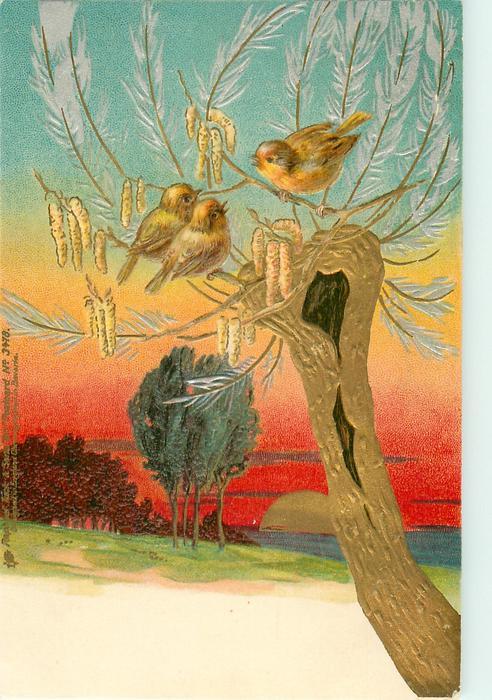 three birds, tree, catkins, red sky