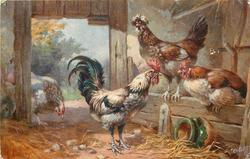 one hen in front of the door, two hens & rooster inside, jar on side