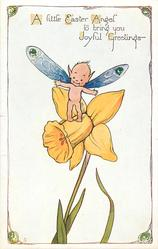 A LITTLE EASTER ANGEL TO BRING YOU JOYFUL GREETINGS  pixy standing on daffodil flower