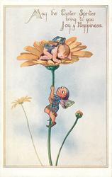 MAY THE EASTER SPRITES BRING TO YOU JOY & HAPPINESS  pixie climbs up flower to another