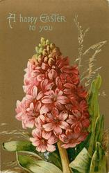 A HAPPY EASTER TO YOU  pink hyacinth, stem centre/right at base