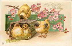 MANY HAPPY RETURNS OF THE DAY four chicks, two in basket