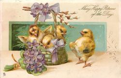 MANy HAPPY RETURNS OF THE DAY  three chicks in basket behind bunch of violets, another chick stands to right, facing away