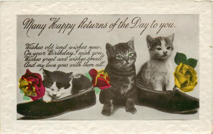 MANY HAPPY RETURNS OF THE DAY  three cats, two of them in shoes