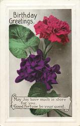 BIRTHDAY GREETINGS  carnation & violets