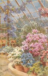 greenhouse interior,  flowers in pots to right, paving lower left