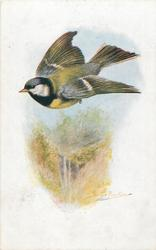 Great Tits in flight to left, waterfall below