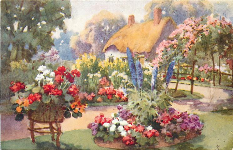 blue delphiniums, begonias in circular bed in front of path leading to cottage, tub of begonias lower left