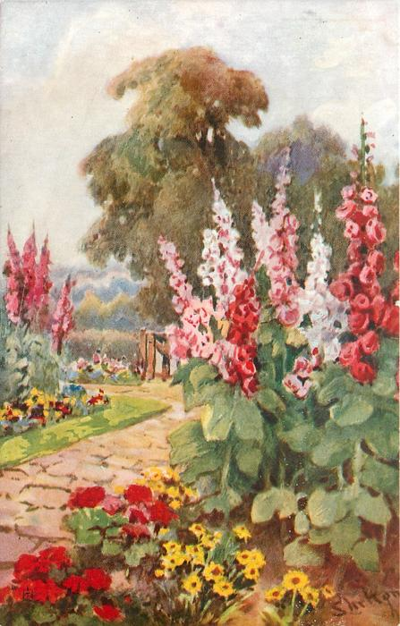 multicoloured hollyhocks to right of paved path leading to gate, tree behind, begonias & daisies below