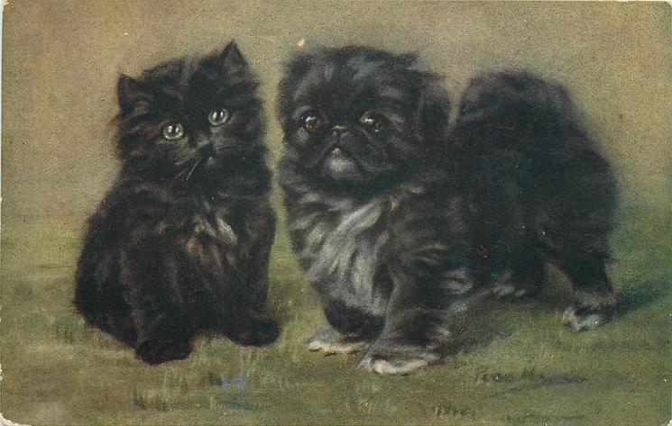 LUCKY PLAYMATES  black kitten left, pekingese puppy right