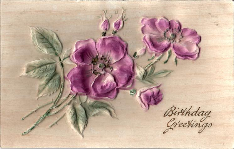 BIRTHDAY GREETINGS  purple roses & buds