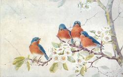 4 blue birds with red breasts on dogwood, 3 on upper branch, one on lower