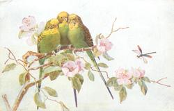 three green/yellow budgerigar/budgies on pink flowered branch