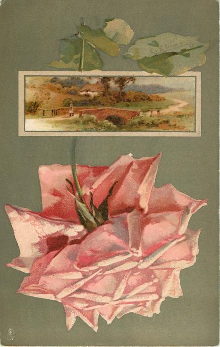 pink rose below inset of country scene, man at end of bridge, house behind