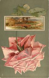 pink rose below inset of country scene, man at end of bridge, house behind