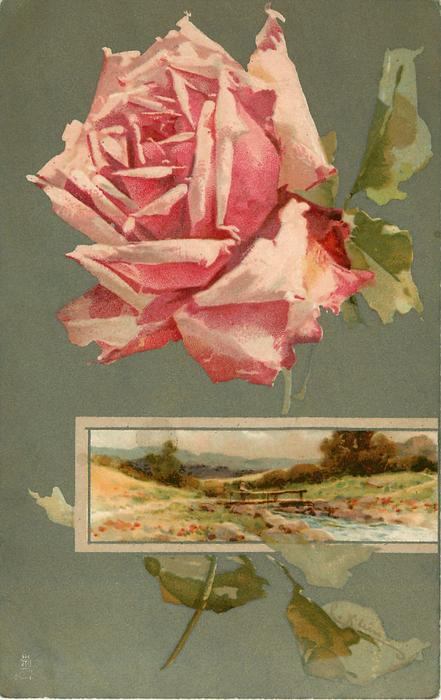 pink/white rose above inset of bridge over steam