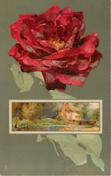 red rose above oblong inset of man fishing, house behind, lock gates to right