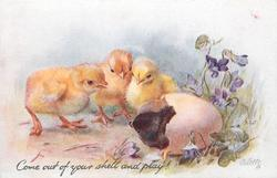 COME OUT OF YOUR SHELL AND PLAY!  three yellow chicks observe black one in shell, violets right