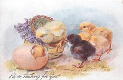 WE'RE WAITING FOR YOU!  three yellow & one black chick look right at yellow in egg, violets in basket left