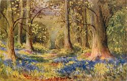 woodland scene, bluebells between large trees, distant fence in center