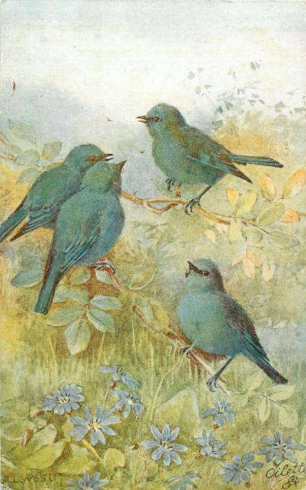 four blue birds, violets below