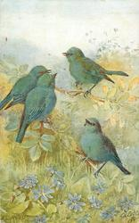 four blue birds, violets below