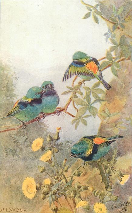 four multicoloured finches, thistles below