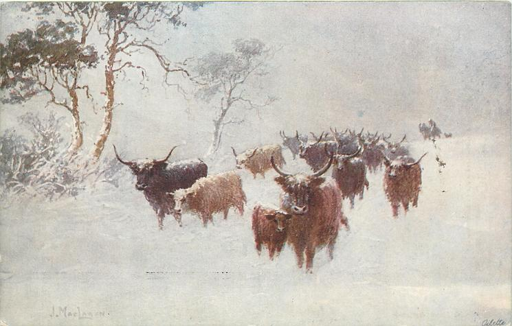highland cattle, travelling forward in snow, three trees to left, man on horse in distance