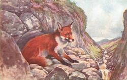 THE COMMON FOX