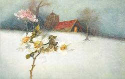 snow scene, white dog rose left, church behind, pink blosson tree left of church