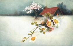snow scene, white dog rose right, house  behind,  pink blosson tree left of house