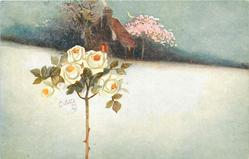 snow scene, white standard rose left, house behind, with pink blossom tree to right of house
