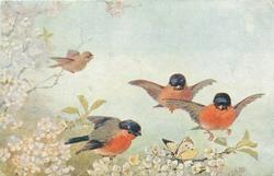 three red-breasted bullfinches, look at yellow butterfly, another bird behind