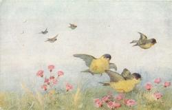 three yellow birds with blue/black heads fly right, others in distance left
