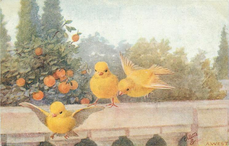 yellow birds flying off wall, orange tree behind them