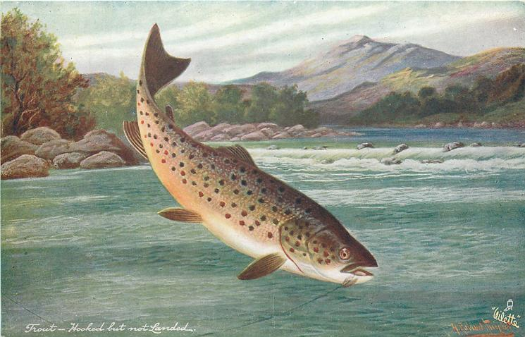 TROUT-HOOKED BUT NOT LANDED
